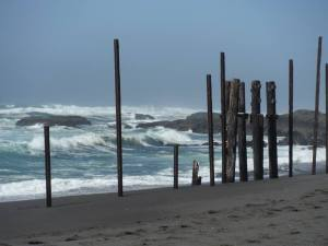 pilings at MacKerricher