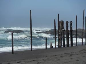 pilings at MacKerricher